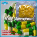 Grosse poudre 2, 4-Dinitrophenate 2, 4-Dinitrophenol DNP de perte de poids de supplément de Burning