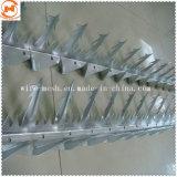 Il punto d'acciaio galvanizzato della parete/punto dell'uccello Anti-Arrampica il punto pungente di obbligazione dei chiodi