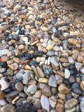 [مولتي-كلورس] طبيعيّة بيضويّة حصاة حجارة لأنّ يرصف حديقة
