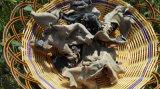 말린 까만 버섯 모양 백색 뒤 사나운 버섯