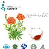 La luteína/Caléndula hierbas Extract-Medicinal-certificado ISO9001
