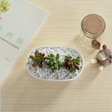 Tipo oca di ceramica dello scrittorio del tavolino da salotto di bianco del Flowerpot