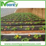 庭は雑草防除のマットの地被植物を供給する