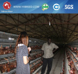 Starker und haltbarer Huhn-Bratrost-Rahmen