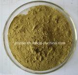 草のAstragalusのエキスAstragaloside IV 10%、20%、80%、HPLC著98%