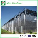 농업 야채를 위한 다중 경간 폴리탄산염 장 녹색 집