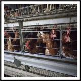 Venda a Médio Oriente Ásia Good Quality Bird Cage