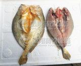 Tipo médio peixe que desossa a máquina, máquina de corte F-GB-170 da faixa de peixes
