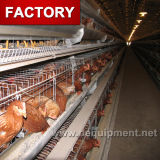 직류 전기를 통한 직업적인 제조 공장 닭 감금소