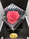 Belas preservada Caixa Rosa Acrílico Floreira durar para sempre