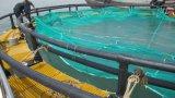 HDPE Rohr für Kreis-sich hin- und herbewegende Aquakultur-Fischzucht-Rahmen