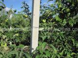 Конкретные колонки принятия конкретных винограда Trellises машины