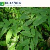 Estratto dell'erba del Epimedium di Icariin di alta qualità per salute degli uomini