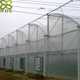 Estufa de plástico avançado Estufa agrícola para plantações de rosas
