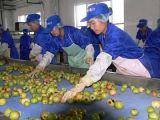 오렌지 주스 생산 라인 산업 주스 갈퀴 작은 과일 주스 공장