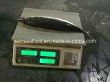 De grote Makreel van de Vissen van de Grootte Nieuwe Vangende Bevroren Vreedzame 400-500&500g+