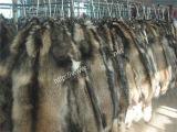 Peles de Raccoon guaxinim (010)