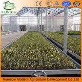 Seedbed agricolo della serra con la rete metallica saldata