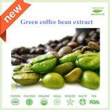高品質GMPの標準緑のコーヒー豆のエキス50%の60% Chlorogenic酸