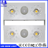 新しいLEDはライト極度の内腔1000Wの穂軸のクリー族3590をLEDがライトを育てる育てる
