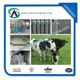Landbouwbedrijf Fenceing & de Omheining van het Gebied