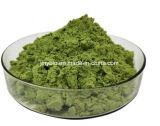 Natürliches Spinat-Auszug-Puder mit Vitamin K, 4:1 ~20: 1