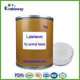 Rebanhos animais Plantarum de Probiotics do lactobacilo e alimentação animal do companheiro
