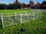 Оборудования для сельского хозяйства --- крупного рогатого скота и овец/лошадь во дворе панели