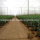 Landbouw Plantaardige Nieuwe PE Schaduw Netto met UV (yhz-SDN08)