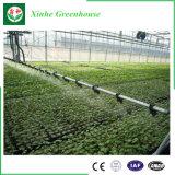 Type de Venlo serre chaude de polycarbonate pour la plantation d'agriculture de Morden