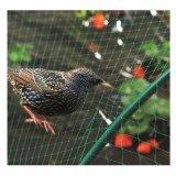 庭の使用の単繊維の鳥の網によって結ばれる鳥Neting