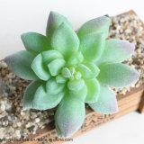 ロータス景色の装飾的な花の小型緑の人工的な擬似Succulentsのプラント