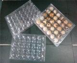 Approvisionnement en plastique de vente chaud de la Chine de 30 de trous plateaux d'oeufs