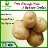 2018 La récolte de pommes de terre fraîches chinois 100g avec des prix bon marché