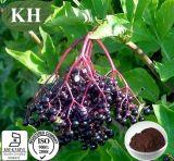 Выдержка Elderberry, выдержка Nigra Sambucus, ~ 25% Anthocyanidins 3%