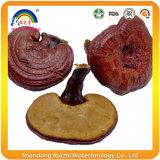 전체적인 부분에 의하여 Ganoderma 말리는 Lucidum 버섯