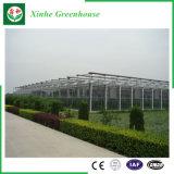 Serra di vetro della multi portata per piantare