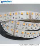 Double lumière de bande de la rangée SMD5050 RGBW SMD DEL de DC12V/24V