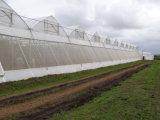Opleveren van het anti-insect & LandbouwBescherming die 40mm X 25mm opleveren