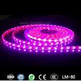 Свет прокладки таможни SMD 5050 RGB Ws2812b СИД волшебной карточки SD цвета гибкий для занятности