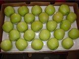 신선한 녹색 맛있은 황금 Apple