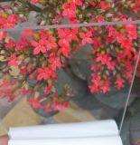Feuille de cavité de PC de polycarbonate de Quatre-Mur de vente directe d'usine