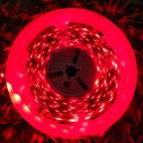 Larga vida TIRA DE LEDS RGB decorativos TIRA DE LEDS flexible