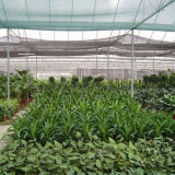 Landbouw Nieuwe PE Schaduw Netto met UV (yhz-SDN02)