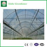 Invernadero de la hoja del policarbonato de Venlo con el sistema hidropónico