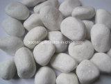 Ciottoli bianchi come la neve di caduta per l'abbellimento della pietra