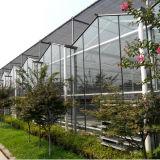 De landbouw Grote Serre van het Glas voor Paddestoel/Rozen/Tomaten
