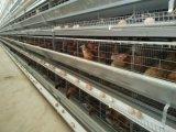 Equipamento chinês das aves domésticas do baixo custo para o serviço do batente do projeto um da exploração agrícola da grelha (XGZ-GR023)