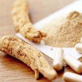 Fabricant fournissant extrait naturel de ginseng pur