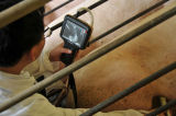 Machine portative d'ultrason de vétérinaire des appareils médicaux Hv-6 élégants les meilleur marché pour des animaux